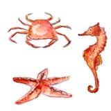 套手拉的水彩海生物:橙色螃蟹、海星和海马 在白色b隔绝的五颜六色的传染媒介例证 库存图片