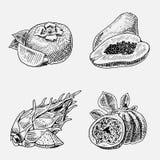 套手拉,被刻记的新鲜水果、素食食物、植物、葡萄酒看起来无花果的,柿子和pitaya 免版税库存图片