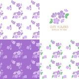 套无缝的紫罗兰色花纹花样 库存图片