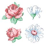 套未打开和开花的被画的芽桃红色玫瑰花和白色春黄菊手图画,传染媒介例证,花卉绣 免版税库存图片