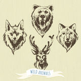 套标志手拉的森林动物:狼,熊,鹿,狐狸 免版税库存图片