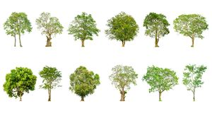 套树形状和树枝在白色背景隔绝的 库存图片