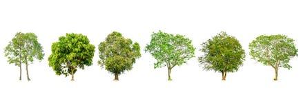 套树形状和树枝在白色背景隔绝的 免版税库存图片