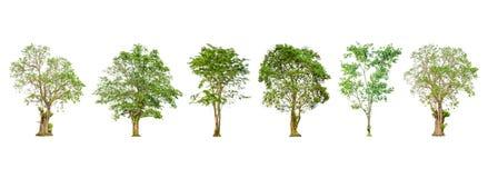 套树形状和树枝在白色背景隔绝的 免版税库存照片
