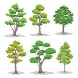 套树,自然传染媒介例证 免版税库存照片
