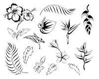 套棕榈和花叶子  向量例证