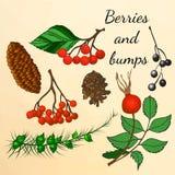 套森林莓果和爆沸在秋天样式 库存照片