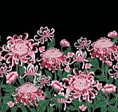 套植物的花菊花 免版税图库摄影