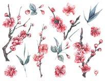 套水彩春天开花的花卉元素 免版税图库摄影