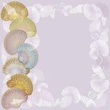 套海扇壳有时髦的构成和光背景 图库摄影