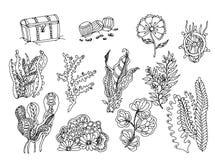 套海草 在黑白的传染媒介图象 免版税库存图片