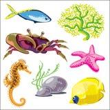 套海洋动物 免版税库存图片