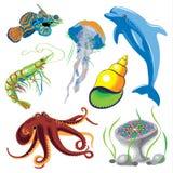 套海洋动物 免版税库存照片