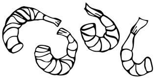 套煮熟的虾 传染媒介海鲜大虾现实例证 库存图片