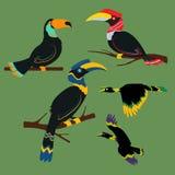 套犀鸟热带鸟 库存照片