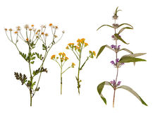 套狂放烘干被按的花和叶子 免版税库存照片