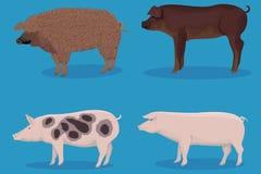 套猪动画片 库存图片