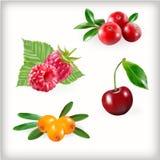 套甜莓果 免版税库存图片