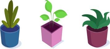 套白色背景的等量盆的植物 库存例证