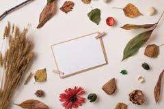 套秋天干燥植物和邀请纸牌 库存照片