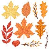 套秋天黄色和红色叶子 库存图片