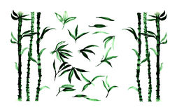 套竹植物和叶子,水彩例证 库存例证
