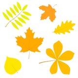 套简单的秋叶,隔绝在白色背景,在ve 免版税库存图片
