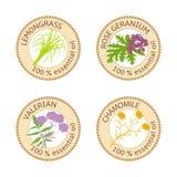 套精油标签 玫瑰香叶,柠檬香茅,春黄菊,拔地响草本 免版税库存图片