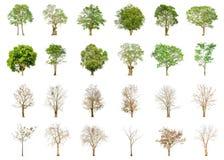 套绿色树和干燥树形状和在白色背景的树枝隔绝的 库存照片