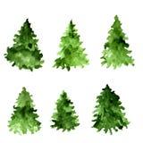 套绿色水彩云杉 杉树汇集 免版税库存照片