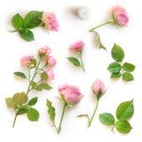 套美丽的桃红色玫瑰隔绝与在白色背景的阴影 免版税库存照片