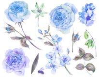套葡萄酒水彩玫瑰离开,开花的分支 免版税库存照片