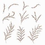 套被绘的水彩秋叶和枝杈 设计的花卉装饰元素 也corel凹道例证向量 免版税库存图片