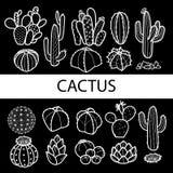 套被隔绝的仙人掌和多汁植物在白色概述&黑色 皇族释放例证