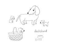 套逗人喜爱的达克斯猎犬例证用不同的姿势 库存图片