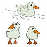 套逗人喜爱的鸭子动画片 向量例证