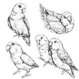 套逗人喜爱的滑稽的爱情鸟鹦鹉 免版税图库摄影