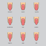 套钉子不同的形状在灰色的 钉子形状象 免版税库存图片