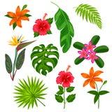 套风格化热带植物、叶子和花 装饰的对象,在广告小册子,横幅的设计 免版税库存照片