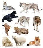 套食肉动物的图象 免版税库存图片