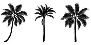套黑传染媒介棕榈 拉长的现有量结构树 图库摄影