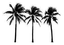 套黑剪影椰子树,被隔绝的自然植物信号 免版税库存图片