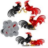 套黑和红色动画公鸡的战斗的史诗场面在白色背景隔绝的 尘土云彩和 图库摄影