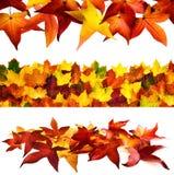 套3个秋季边界 免版税库存图片