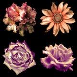 套4在1种嫩软的颜色减速火箭的花:被隔绝的天竺葵、玫瑰和装饰向日葵 库存照片