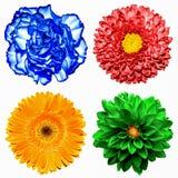 套4在1花:红色菊花、橙色大丁草、蓝色丁香和红色被隔绝的菊花花 免版税库存图片