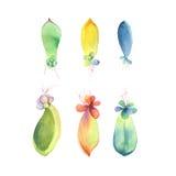 套水彩多汁植物婴孩 笤帚查出的白色 免版税库存照片