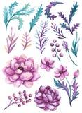 套水彩桃红色牡丹和绿色叶子 免版税库存照片