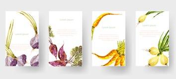 套水彩菜标记和卡片,被说明的传染媒介 库存图片