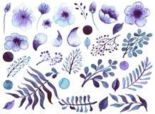 套水彩紫罗兰色花、叶子和元素 免版税图库摄影
